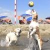 Cani in spiaggia, istruzioni per l'uso