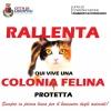 """""""RALLENTA, QUI VIVE UNA COLONIA FELINA PROTETTA"""""""