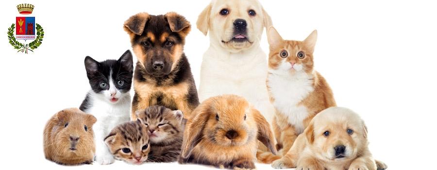 Servizio di Tutela degli Animali